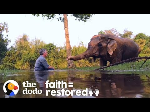 Rescued Elephant Has The Sweetest Reaction To Music | The Dodo Faith = Restored