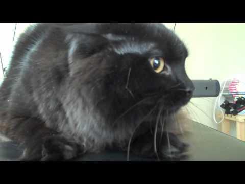 Funny cat crying and hissing (REALLY FUNNY) - UCB-u8BSU0NMFfnRVzjOzIhA