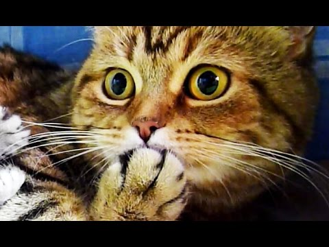 Cute Kittens and Funny Cats  Videos Compilation | Happy Birthday Coco ! - UCERQZLRMniqsMlgBxme32cQ