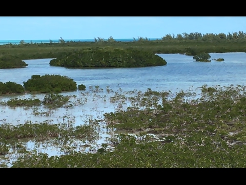 Magnificent Mangroves