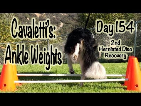 Day 154: Cavaletti's - Ankle Weights (1st Session)