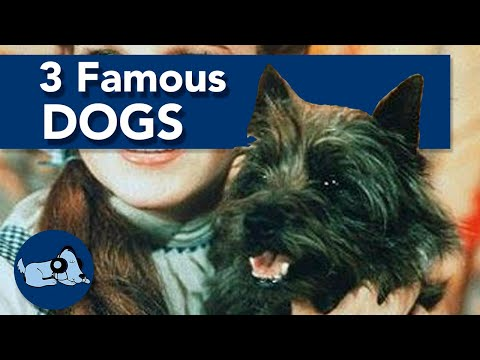 3 Famous Dogs and Their Stories!
