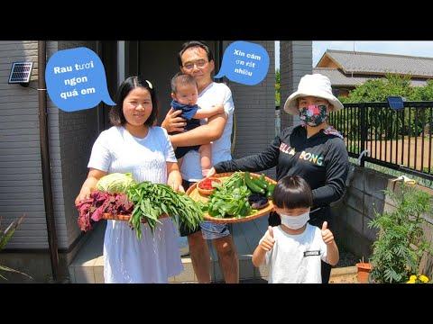 Vợ chồng anh chị hàng xóm bất ngờ với mớ rau tươi rói Quỳnh cắt gửi tặng #934