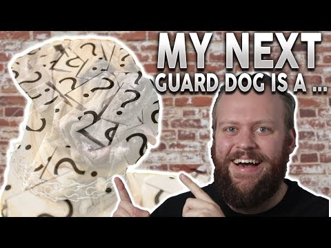 The BEST Family Guard Dog! I'M GETTING A...