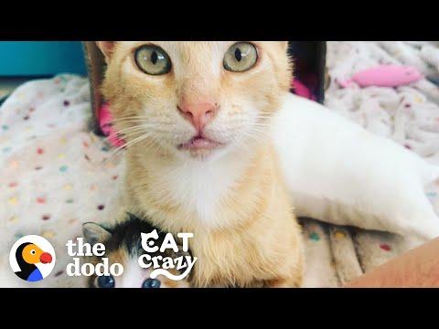 Smartest Stray Cat Follows Woman Home   The Dodo Cat Crazy