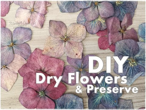 How I DRY & Preserve FLOWERS for Art Journaling ♡ Maremi's Small Art ♡