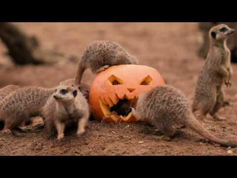 It's pumpkin party time!
