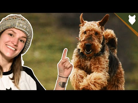 Why You Should Get A Terrier