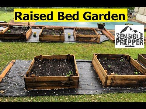 Survival Gardening  Budget Raised Beds