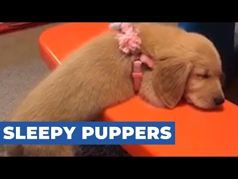 Dog Falls Asleep on Bench With Half Their Body Hanging Out