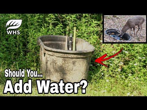 Should You Add A Deer Waterhole Where You Hunt?