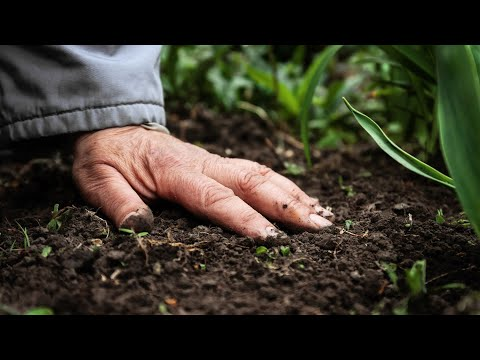 """Cover photo for Homegrown 