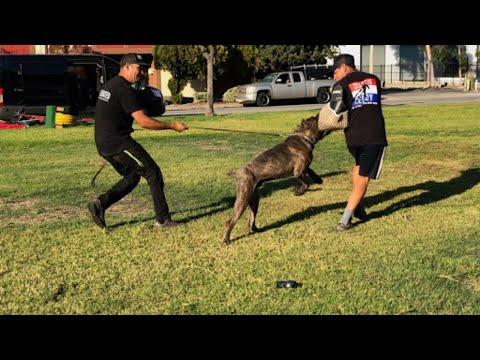 Dog Training Tuesdays: Oscar Mora