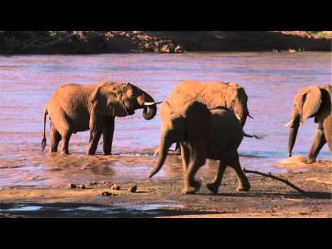 Safari i Samburu, Kenya - Jambo Tours
