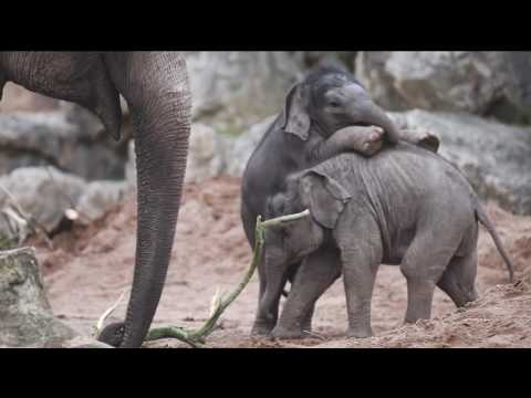 Baby boom at Chester Zoo