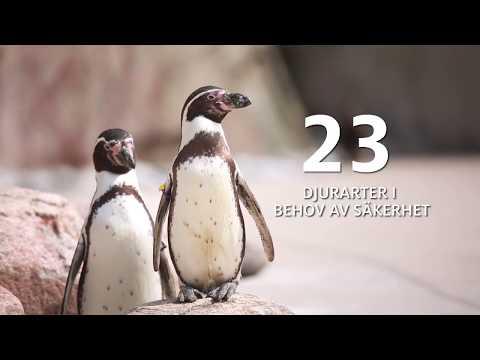 Kameraövervakning skapar trygghet för djuren i Slottsskogen