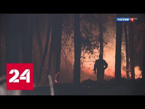 Сразу несколько регионов России охвачены сильнейшими лесными пожарами