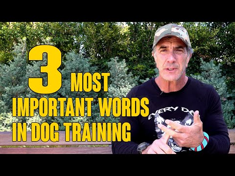 The 3 MOST Important Words in Dog Training
