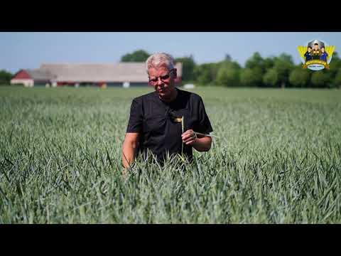 #RÖTTERNA - Hans-Erik resonerar kring svamp, löss och torka
