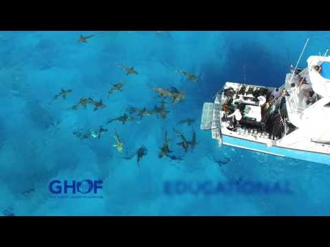 Guy Harvey Ocean Foundation Mission