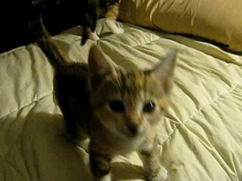 Cute Kittens Crying III - UCC0csy0ilYK0eeFKbvgD2_w