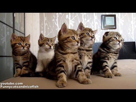 Funny Cats Choir | Dancing Chorus Line of Cute Kittens - UCERQZLRMniqsMlgBxme32cQ