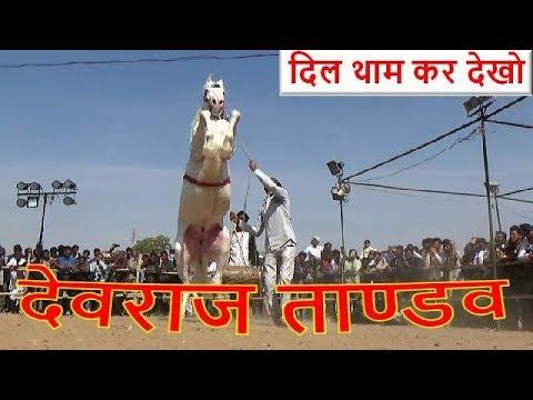 दिल थाम लो - आ गया देवराज घोड़े का ताण्डव डांस - Awsome Indian White Horse Dance In Nagaur Mela - UCqv3b5EIRz-ZqBzUeEH7BKQ