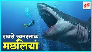 दुनिया की सबसे जानलेवा मछलियां   Most dangerous fishes in the world in hindi   Jhannaat Facts