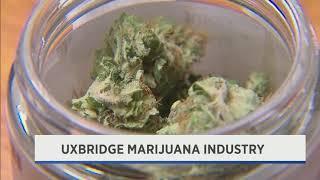 Uxbridge Marijuana Businesses - August 21st, 2019