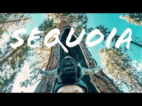 SEQUOIA   Cinematic   GoPro