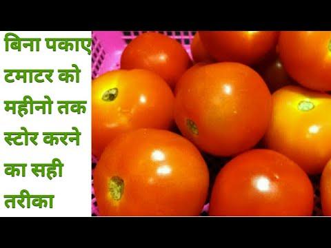 बिना पकाए टमाटर को महीनो तक स्टोर करने का सही तरीका || Best Way to  Preserve Tomatoes for Long - UCwIkoczPBSDL--I1AkbPFzQ