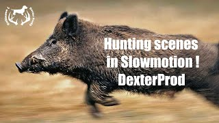 Hunting scenes in slow motion !