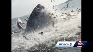 Meet the man who captured this epic encounter with a humpback whale