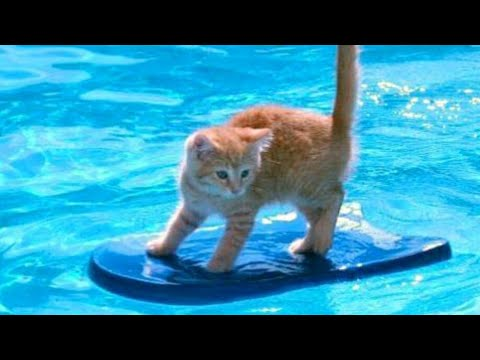 1% CHANCE that these animals WON'T MAKE YOU LAUGH! - Funny ANIMALS IN POOLS videos - UCKy3MG7_If9KlVuvw3rPMfw
