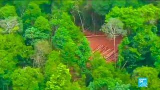 Amazon fires: Brazilians blame President Bolsonaro