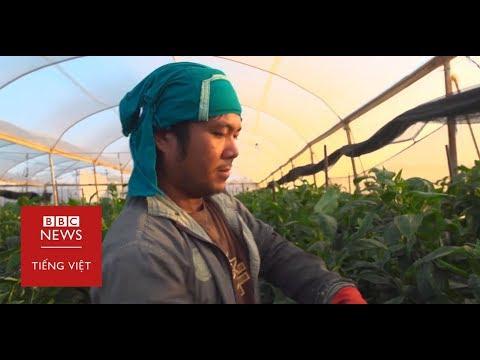 Nhân công Thái sống trong điều kiện lao động và sinh hoạt tồi tàn tại Israel - BBC News Tiếng Việt