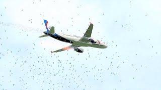 Ural Airlines Emergency Landing Zhukovsky Airport Due To Bird Strike - [A321 Flight U6178]