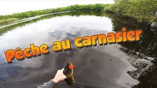 Pêche au carnassier - Prise d'un beau brochet au popper