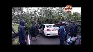 Roadside tree falls on car, driver injured