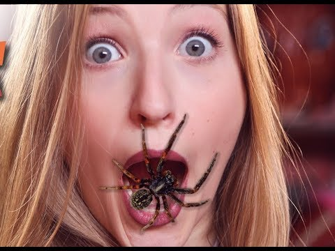 Animals scaring people !!! You do not believe how they react to it ...