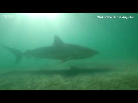 Cá mập đi spa