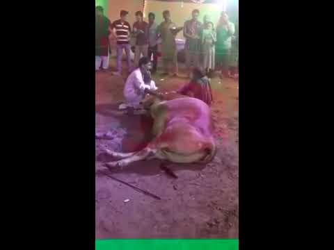 Dekheay Ye Janwar Kese Apnay Malik Ka Hukum Manta Hai