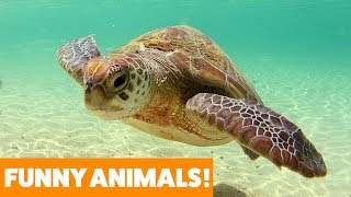 What You Didn't Know About Turtle Shells | Funny Pet Videos 2019