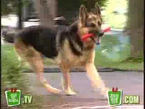 Explosive Dog