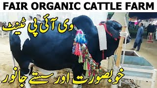 Fair Organic Cattle Farm | Sohrab Goth Cow Mandi 2019 Karachi | Vip Tents Latest Price Update