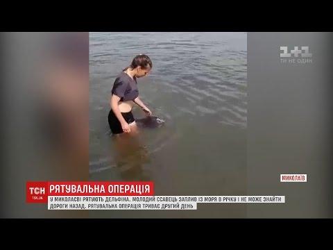 У Миколаєві у річку Інгул з моря заплив дельфін