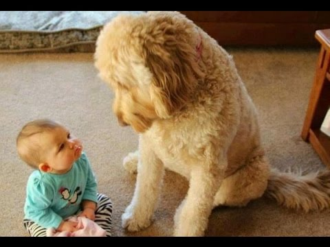 FUN CHALLENGE: Try NOT to laugh - Funny & cute dogs and kids - UCh26jOuo3ejHh95V0yau3gA