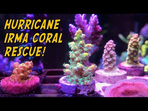 Hurricane Irma Rescue - Live Coral Unboxing Part 2 (LOTS of Eye Candy!)