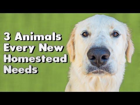 3 Animals Every New Homestead Needs