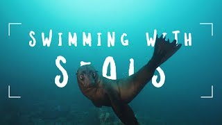 Oceans Most PLAYFUL - Fur Seals x Sony A7III